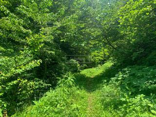 夏の森の写真・画像素材[4771556]