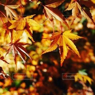 木のクローズアップの写真・画像素材[4771866]