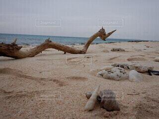 水域の隣の砂浜の写真・画像素材[4772354]