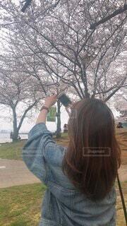 桜を撮る人を撮るの写真・画像素材[4772115]