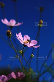 お花畑の写真・画像素材[214298]