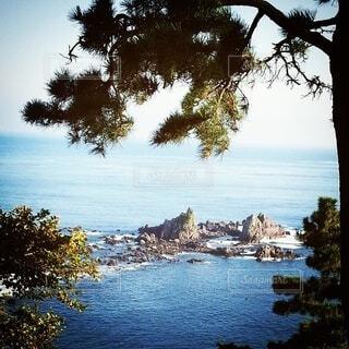 木と海の写真・画像素材[4774439]