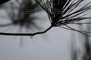 木のクローズアップの写真・画像素材[4796354]