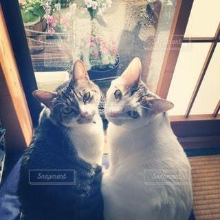猫の写真・画像素材[83066]