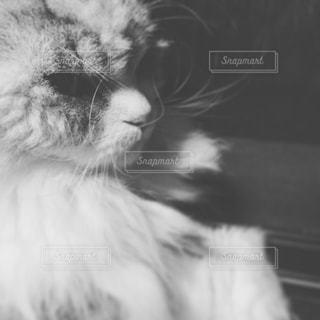 猫の写真・画像素材[214594]