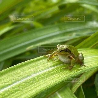 カエルさん、こんにちはの写真・画像素材[4786878]