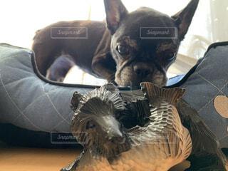 犬vs熊の木彫りの写真・画像素材[4804793]