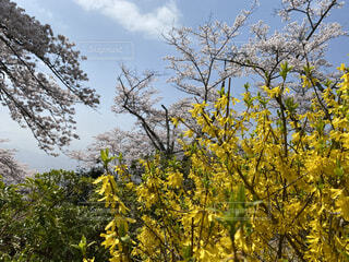 山の上にある公園の春の風景の写真・画像素材[4797572]