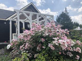 建物の前に咲いているピンクの花の写真・画像素材[4852111]