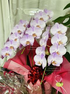 ピンク色の胡蝶蘭の写真・画像素材[4868755]