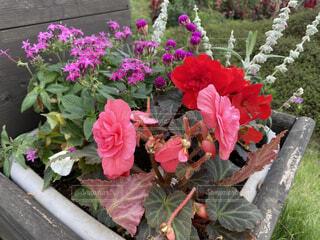 フラワーガーデンの花の写真の写真・画像素材[4911488]