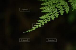 葉の先端クローズアップの写真・画像素材[4794233]