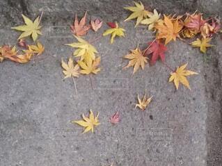 彩りの石畳の写真・画像素材[4911334]