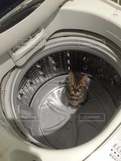 猫が好きの写真・画像素材[215144]