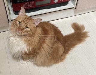 猫の写真・画像素材[4797049]
