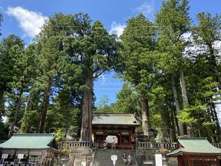 神社の写真・画像素材[4797086]