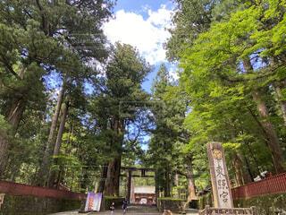 神社の入口の写真・画像素材[4797094]