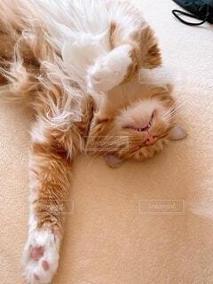 昼寝 猫の写真・画像素材[4797155]
