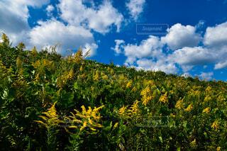 花と夏空の写真・画像素材[4800350]