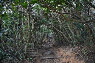 トトロの森の写真・画像素材[4796122]