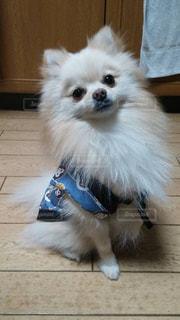 犬の写真・画像素材[215496]