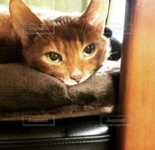 ソファーに横たわる猫の写真・画像素材[4798651]