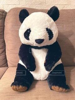 パンダのぬいぐるみの写真・画像素材[4804974]