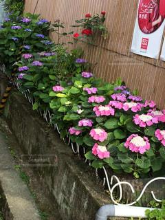 花の写真・画像素材[215557]