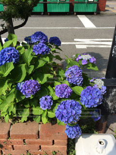 花の写真・画像素材[215558]