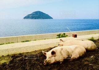 水の体の前で草の上で放牧する牛の写真・画像素材[4810800]