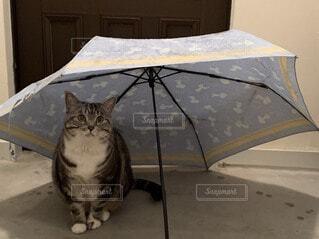 開いた傘の中に座る猫の写真・画像素材[4802508]