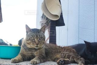 漁港でくつろぐ猫の写真・画像素材[4878057]