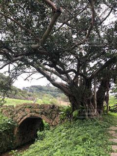 森の中の大きな木の写真・画像素材[4809811]