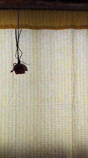 薔薇のドライフラワーの写真・画像素材[4805786]