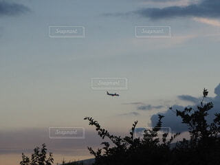 空を飛んでいる鳥の群れの写真・画像素材[4806387]