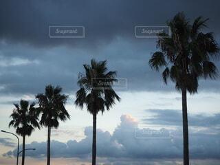 ヤシの木のあるビーチの写真・画像素材[4806386]