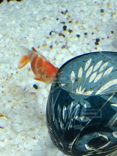 魚 - No.216126