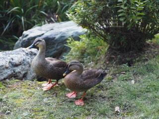 2匹の鳥の写真・画像素材[4808185]