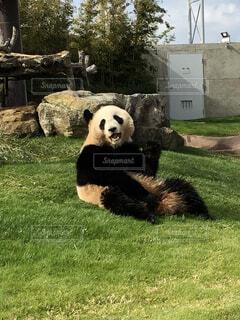 パンダと笑顔の写真・画像素材[4809767]