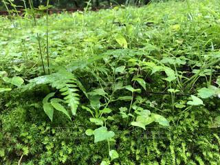 黄緑色が綺麗な草たちの写真・画像素材[4821971]