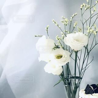 しろいお花に白い背景の写真・画像素材[4807874]