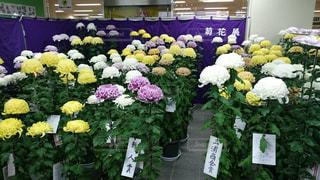 花の写真・画像素材[216345]
