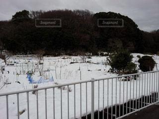 冬景色の写真・画像素材[217043]