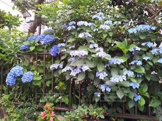 花の写真・画像素材[218946]