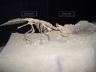 No.229338 化石