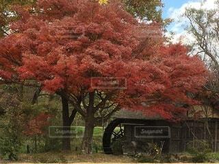 安曇野の秋の写真・画像素材[4813700]