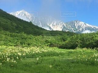 コバイケイソウと白馬三山の写真・画像素材[4819073]
