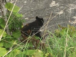 子熊の写真・画像素材[4825957]