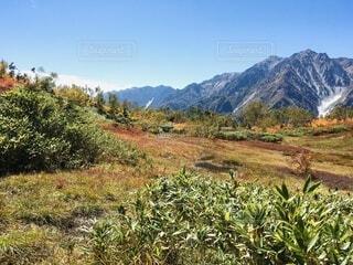 栂池高原の秋の写真・画像素材[4875196]