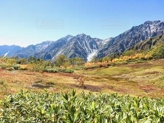 栂池高原の秋の写真・画像素材[4875197]